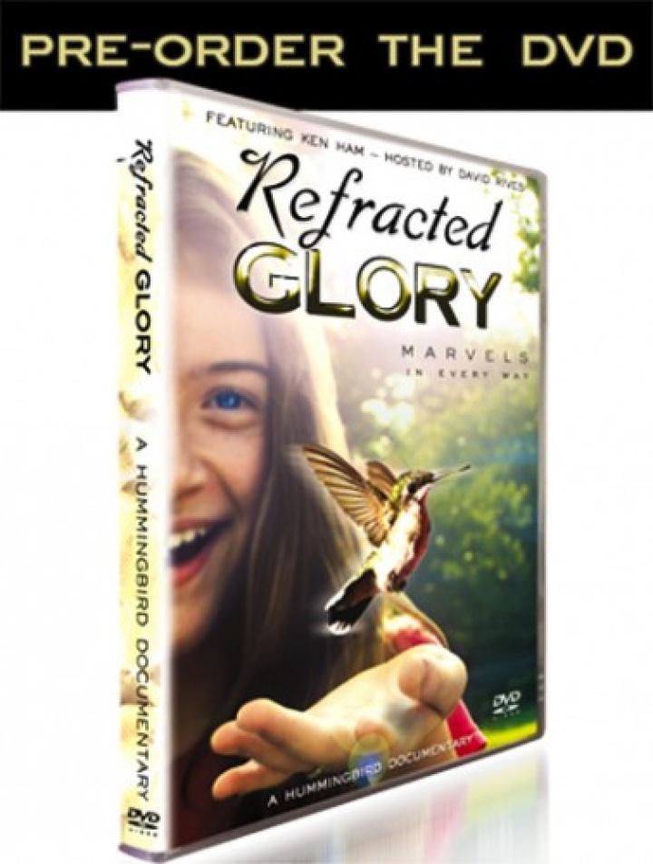 "The Amazing Hummingbird   ""Refracted Glory"" DVD Coming Soon!"