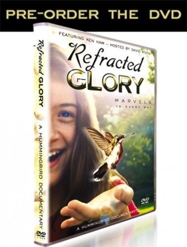 "The Amazing Hummingbird | ""Refracted Glory"" DVD Coming Soon!"