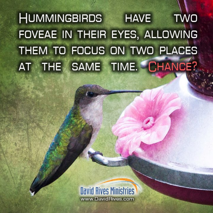 3 Astounding Facts About Hummingbirds