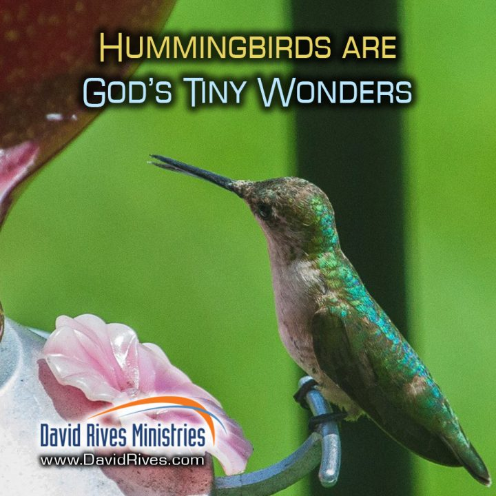 Hummingbirds – God's Tiny Wonder