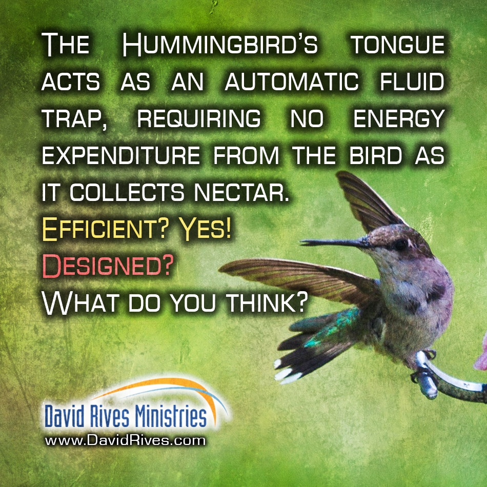 Tongue-Tied | The Evolution of a Hummingbird