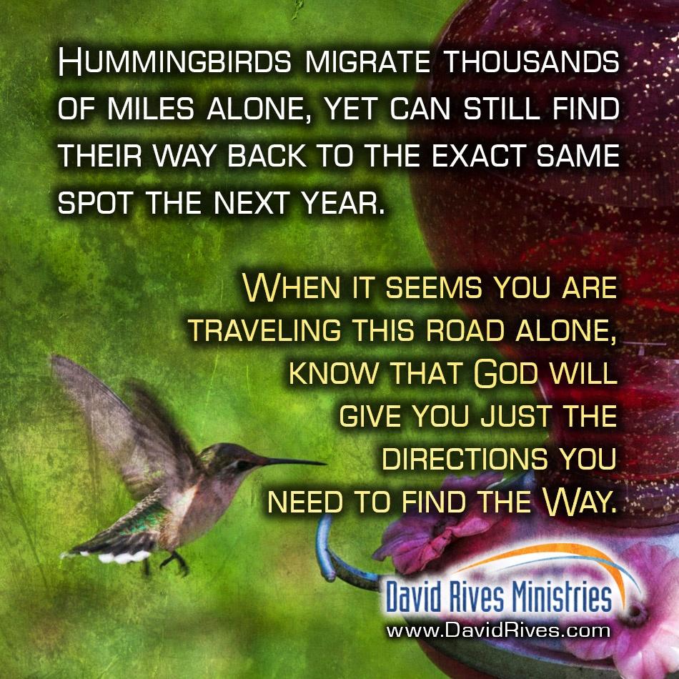 Hummingbird Migration – Following God's Call
