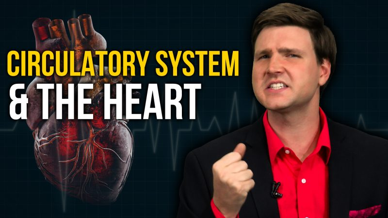 The Circulatory System and the Human Heart | David Rives