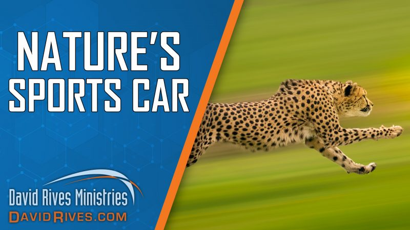 Nature's Sport's Car | David Rives