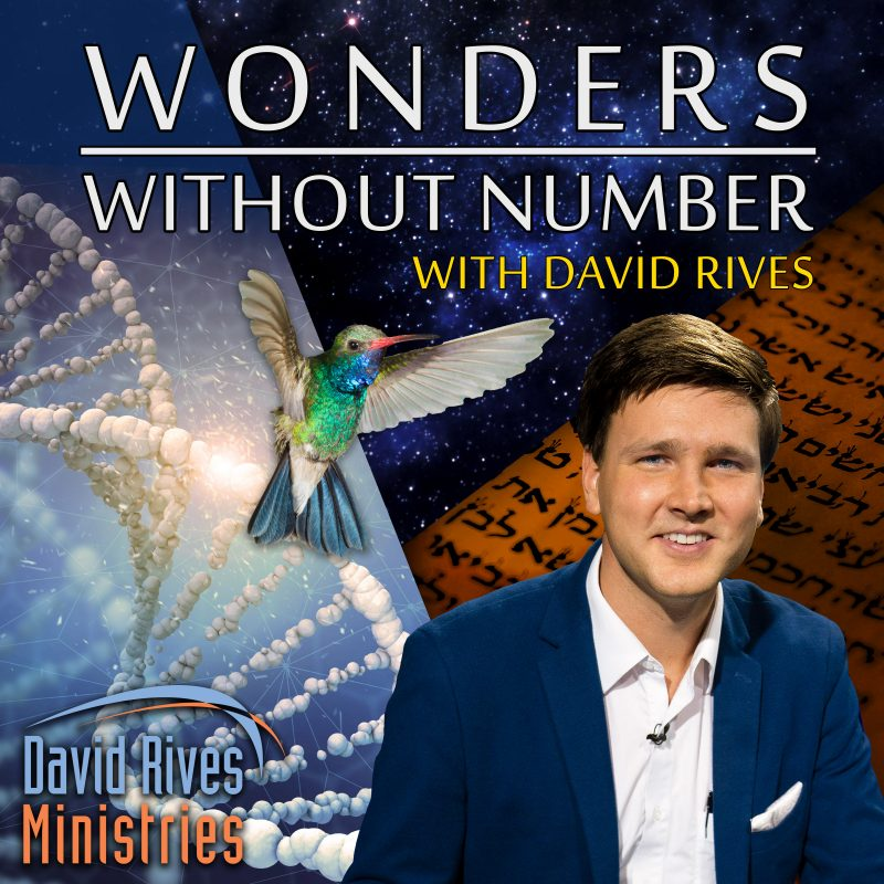 Wonders Without Number Podcast with David Rives