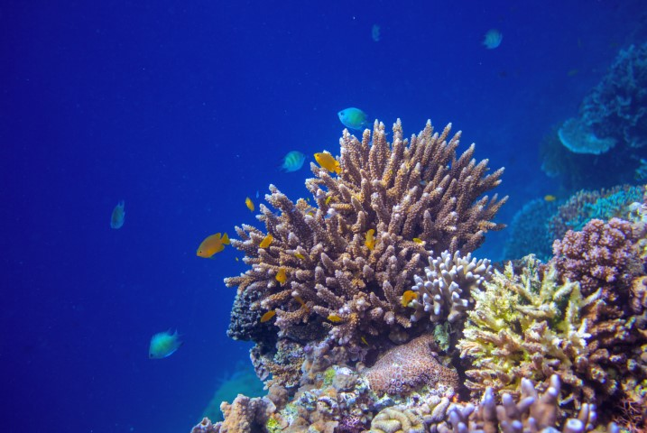 Tropical seashore underwater landscape. Coral reef wall in open sea water.