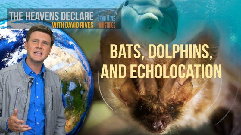 God's Design: Echolocation – How Dolphins and Bats Navigate